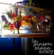 aviary_photo12