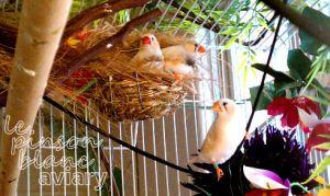 aviary_photo14
