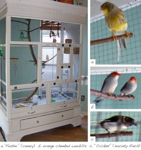 From my avairy ideas Pinterest list - click for more info and credit.