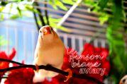aviary_photo11
