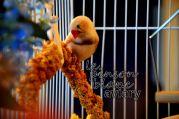 aviary_photo16