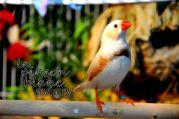 aviary_photo18