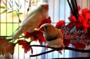aviary_photo25