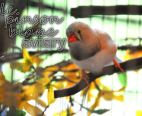 aviary_photo27
