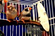 aviary_photo28
