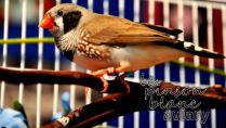 aviary_photo30
