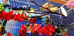 aviary_photo31