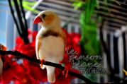aviary_photo32