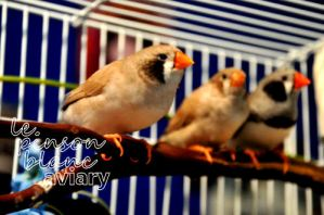aviary_photo8