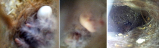 Left: Baby butt! Middle: A full crop means great parents. Right: Little hatchlings just waking up.