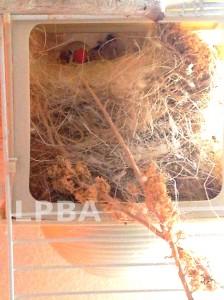 Bronson Nest