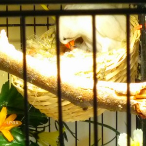 BC CFW hatchlings (Aiden & Bella)