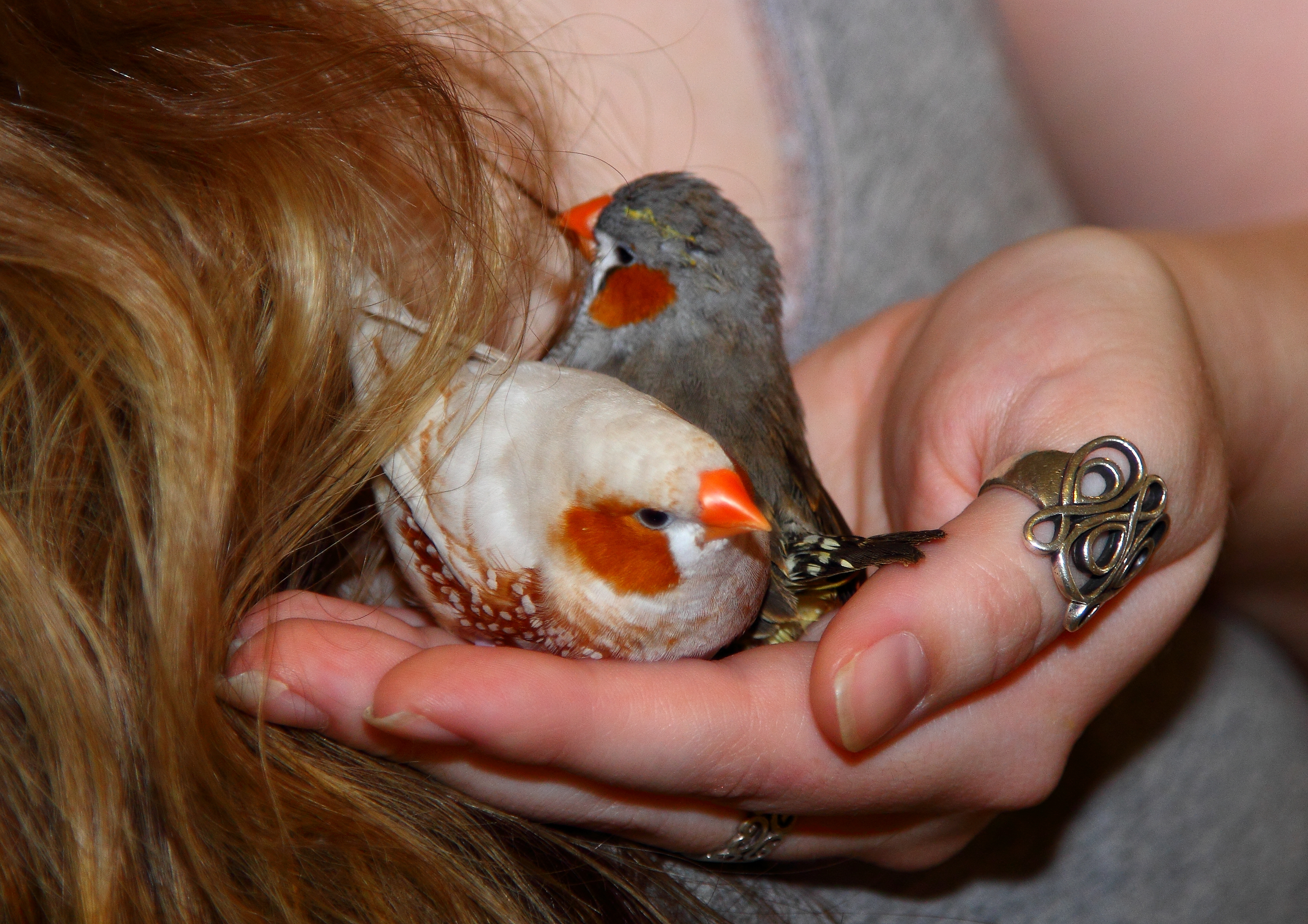About Me & TWFA | The White Finch Aviary