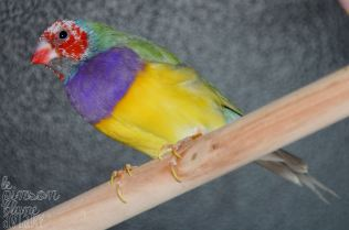 pastel male