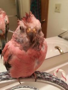 quigley bath